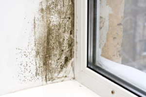 mold removal worcester, mold damage worcester