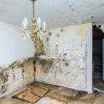 mold removal framingham, mold remediation framingham, mold damage cleanup framingham