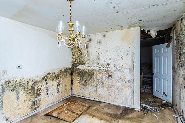 worcester mold damage