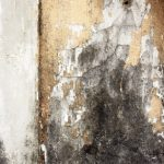 mold damage repair worcester, mold removal worcester