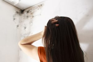 mold damage repair worcester, mold damage worcester, mold damage cleanup worcester