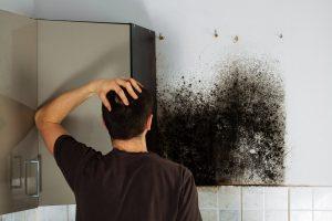 mold removal framingham, mold remediation framingham, mold cleanup framingham